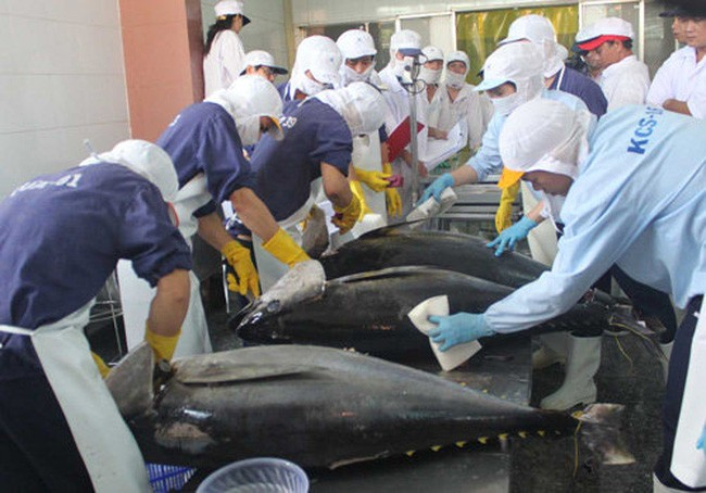 xuất khẩu lao động Nhật Bản ngành thủy sản
